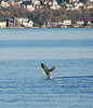 Magnuson Park - Eagle : 